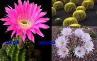 MEZCLA DE CACTUS  40 Semillas cactus Seeds