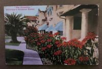 Vintage Postcard The Poinsettias California Christmas Flower Postmarked 1911