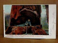 Vintage Postcard WOODCHOPPER LOGGER IN BIG TREE SANTA CRUZ CA 1905 Oakland PM