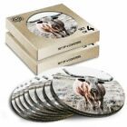 8x Round Coasters in the Box - Texas Longhorn Cow Cattle  #3428