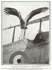 1917 Macedonian Stork Perched On Mechanical Bird In Salonika