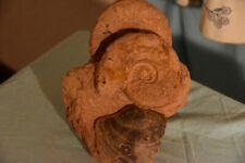 2 ammonites Leioceras  comptum, Entolium corneolum, aalénien