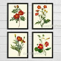 Unframed Botanical Print Set of 4 Antique Red Garden Flowers Home Wall Art Decor