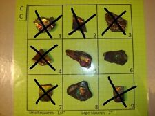 CC Group Mixed Ammolite Ammonite Your Choice (Pick One) Ready to Make Jewelry