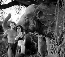"Tarzan Johnny Weissmuller 14 x 11"" Photo Print"