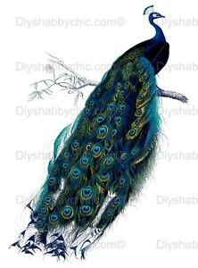 Waterslide Furniture Decal Image Transfer Peacock Perch Upcycle Shabby Chic Art