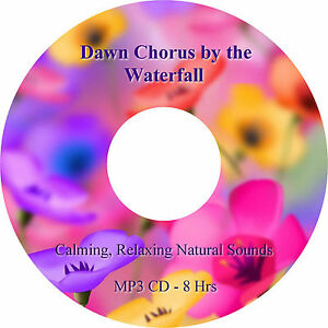 8 Hours Dawn Chorus by the Waterfall MP3 CD Relaxation Healing Stress Relief Spa