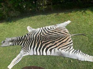 African Equus Burchelli Zebra Hide Rug