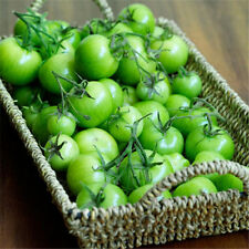 FD1424 Green Agate Tomato Seed fruit vegetable Seed Green Food 1 Pack 20 Seeds✿