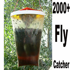 Fly Catcher Drosophila Trap Catchers Traps Insect Bug Killer Pest Control