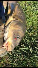 200+ Carp Fishing Pick Ups 8-10mm Diameter Red In Color Carp Bait Tackle Red