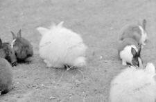 negativ-1930-Hamburg-Tierpark Stellingen-Hagenbeck-Tiere-Hase-10