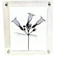 Black Flowers Graphics In Clear Acrylic Mounted Frame NIB
