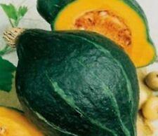 GREEN HUBBARD SQUASH  - 15 seeds (HERITAGE)