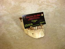 Jaw Business Card Holder, Halloween Prop Human Skull, NEW
