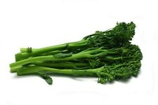 Broccoletti Seed 25 Seeds Heirloom Garden Tasty Italian Vegetable Broccoli