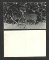 1930s DEER FAMILY IN MAINE RPPC REAL PICTURE POSTCARD
