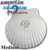 Original AAP Wonder Shell Medium. Fresh NOT Clearance Product! Authorized Seller