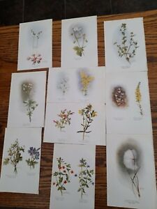 Early C20th BOTANICAL BOOK PRINTS of wildflowers signed NORA HEDLEY 18X 12CMS