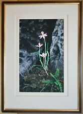 Crocus Tommasinianus, growing wild. Original Gouache by Ann Soper circa 2000