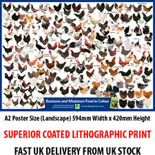 Miniature Fowl Bantams in Colour Litho Art Print Poster A2 59cm x 42cm BLPA2P07