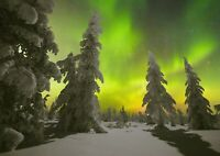 A1| Night Forest & Polar Lights Poster Size 60 x 90cm Nature Poster Gift #16672