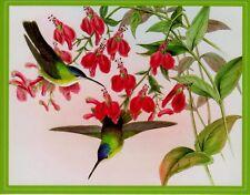Humming Birds John Gould (1804-1881) Cyanomyia Francia Blank Note Card