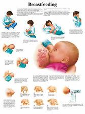 Cartel médico A3-la lactancia (libro de texto médico patología anatomía Foto)