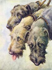 Irish Wolfhound Dogs by Nina Scott Langley 1934 - Large New Blank Note Cards