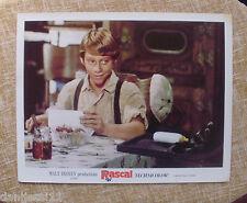 Rascal, 1969, Walt Disney Lobby Card, Technicolor, Walt Disney Productions