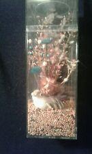 Vintage Quail Dried Flowers Birdseed Decorative AMAC Plastic Box Case G Hurwitt