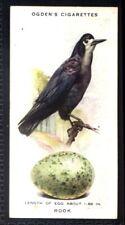 Ogden's British Birds and Their Eggs 1939 - Rook No. 34