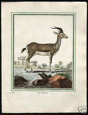 Buffon Quadrupeds Le Kevel Grant's Gazelle 1700-1800 HC engraving natural histor