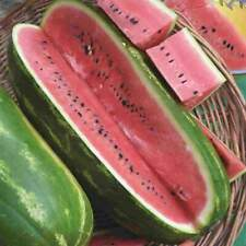 VEGETABLE  WATER MELON  JUBILEE  60 SEEDS
