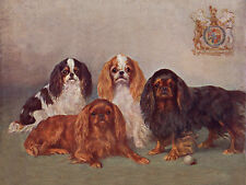 CAVALIER KING CHARLES TOY SPANIEL DOG GREETINGS NOTE CARD GROUP OF FOUR DOGS