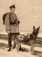 GERMAN SHEPHERD RED CROSS WAR DOG GREAT VINTAGE STYLE GREETINGS NOTE CARD