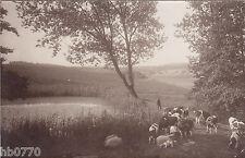 AK Landschaft verm. bei Bockenem, Kühe, Schafe