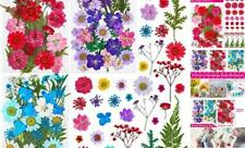 100Pcs Pressed Dried Flowers for Resin, Natural Dried Flower Herbs kit for Resi