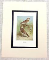 Vintage Uccello Stampa Thorburn's Ornitologia Legno Lark Skylark Art Ca. 1929