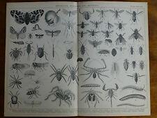 1874 Gravure Entomologie, Myriopodes & arachnides Caterpillar Papillons araignées pou