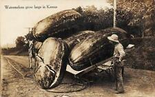 """RPPC """"Watermelons Grow Large In Kansas"""" Giant Fruit Exaggeration Postcard 1911"""