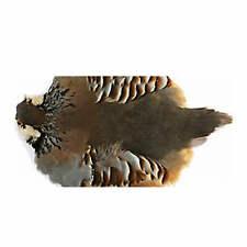 Wapsi Hungarian Partridge Skin #1 - Natural