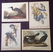 1942 Vintage AUDUBON LOT #2 of 4 BLUE BIRDS INSTANT DECOR Art Print Lithographs