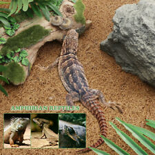 1Pc Reptile Carpet No Deformation Safe Reptile Supplies for Snake Lizard 60x40cm