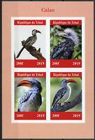 Chad 2019 MNH Calao Hornbills Hornbill 4v IMPF M/S Birds Stamps