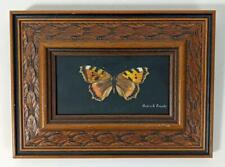 PATRICK FRANKS Oil Painting On Board BUTTERFLY STUDY