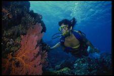 156058 Scuba Diver And Pacific Sea Fans A4 Photo Print