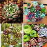800pcs Mixed Succulent Seeds Cactus Home Plant Lithops Rare Living Stones Plants