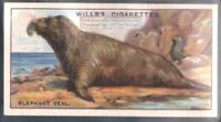 Elephant Seal c90 Y/O Trade Ad Card