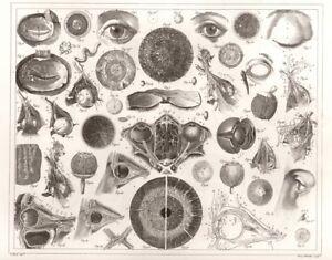 1850 Anatomy of The Human Eye, J G Heck, NEW Fine Art Giclee Print, Anatomical